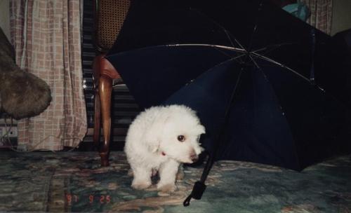 傘の下で2